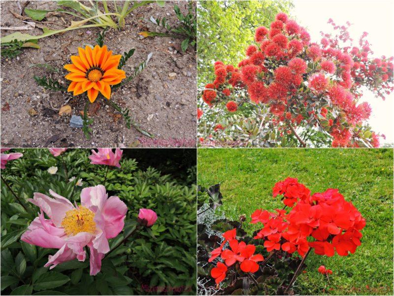 Kleiner Ausflug in meinen Garten
