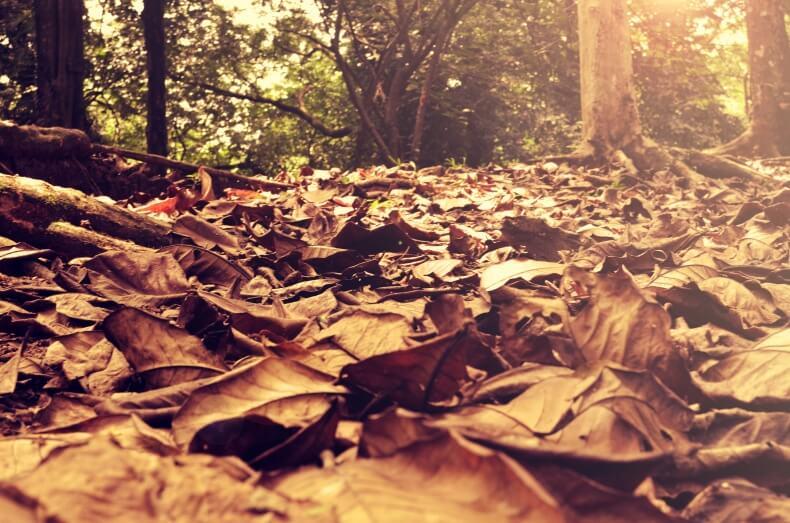 Blogparade: Meine Herbst To-Do Liste
